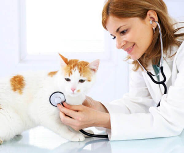 Veterinarian Mississauga