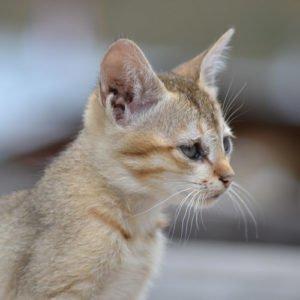 Veterinary Mississauga