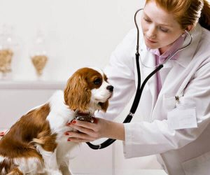 Veterinary Mississauga