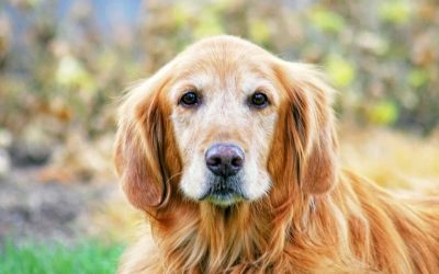 Facts About Senior Pets and a Few Delightful Reasons to Adopt Them