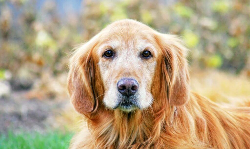 https://eglintonhwy10vet.com/wp-content/uploads/2018/09/Senior-Pet-Blog-Image.jpg