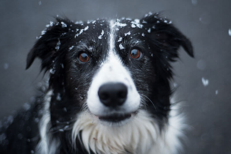 Fun Ways to Keep Your Pet Winter-Fit