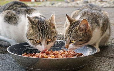 Four Common Pet Food Myths Debunked