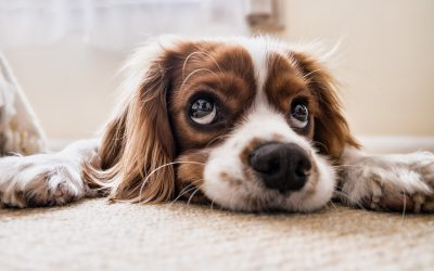 What To Do If You Think Your Dog Has Had a Stroke